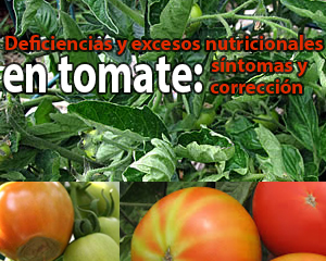 Deficiencias y excesos nutricionales en tomate-sntomas y correccin