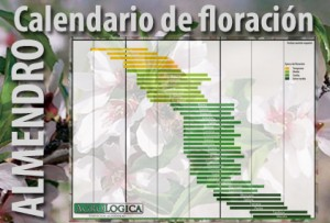 Calendario floracion almendro