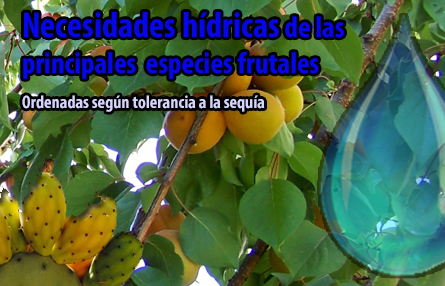 Tabla pluvimetria- especie frutal